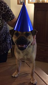 Image of the dog wearing the party hat.